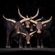 Marina Cano Photography Animal