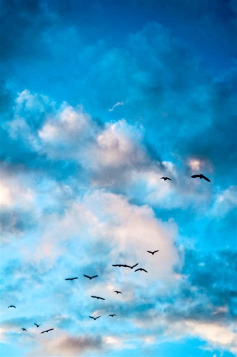 Beautiful Birds and Clouds