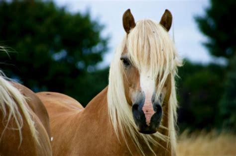 horse breeds  youve  heard