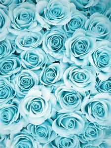 beauty flowers nature turquoise roses pastels tumblush •