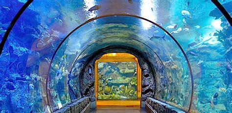 haeundae sea aquarium busan haeundae aquarium show time busan sea aquarium busan aquarium