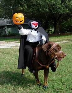 HD Animals: funny pictures of dogs in costumes