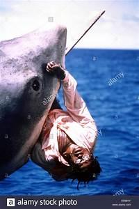 GREAT WHITE SHARK KILLS MAN JAWS (1975 Stock Photo ...