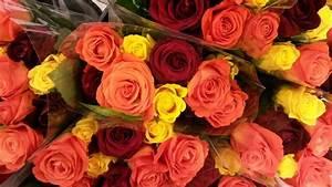 Schnittblumen Länger Frisch : schnittblumen l nger frisch halten was hilft wirklich bild 1 ~ Watch28wear.com Haus und Dekorationen