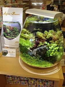 Pflanzen Terrarium Einrichten : pin von arne slin auf aquarium pinterest ~ Orissabook.com Haus und Dekorationen