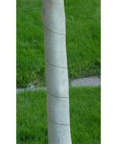 winter tree wrap landscape winter watering plants and pests with
