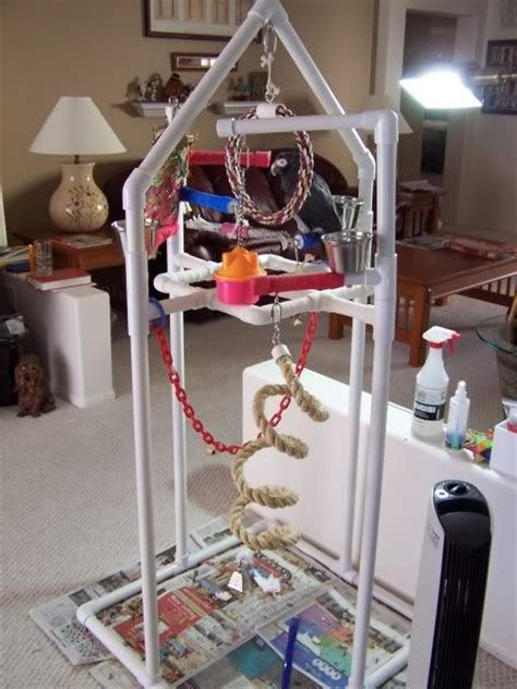 images  bird play gym  pinterest