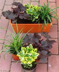Balkonkästen Winterhart Bepflanzen : balkonpflanzen set f r balkonk sten 40 cm lang pflanzen ~ Lizthompson.info Haus und Dekorationen