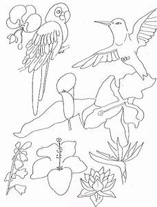 Free tropical birds coloring pages