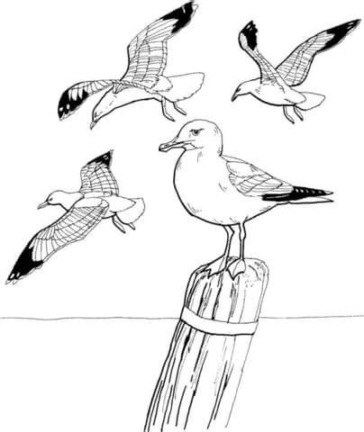 Seagulls coloring page from Seagulls category Select from