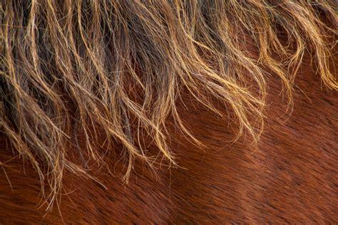 haarlinge beim pferd symptome und behandlung tierischehelden