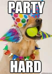 Birthday Dog Meme - 106 best ecards images on pinterest happy birthday greetings anniversary greetings and
