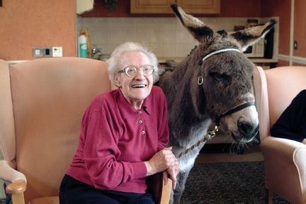 pet therapy brings  joy  animals  care homes