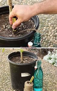 Olivenbaum Im Wohnzimmer überwintern : die besten 25 wasserpflanzen innen ideen auf pinterest wasserpflanzen indoor wassergarten ~ Markanthonyermac.com Haus und Dekorationen