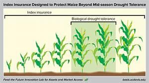 Tanzania Farmers Adopt Innovative Insurance Bundled with ...