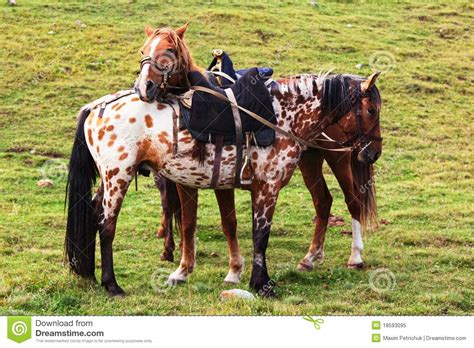 nomadic horses preview