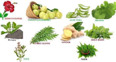Top 10 Herbs To Keep Your Hair Healthy Mylifenstylein
