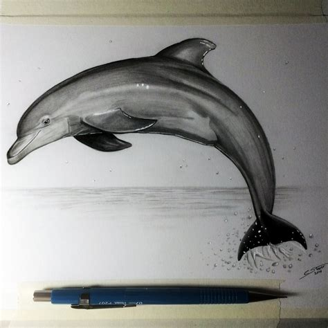 dolphin drawing study  lethalchris  deviantart