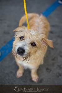 Orange County Humane Society - Pet Adoption In Huntington ...