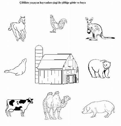 Animals Farm Worksheets Animal Preschool Worksheet Matching