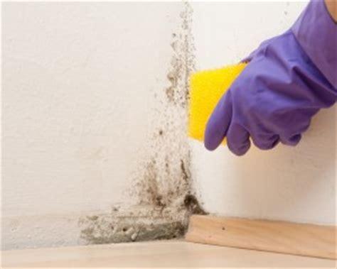 stockflecken aus stoff entfernen stockflecken entfernen tipps und hausmittel