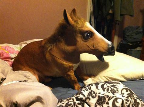 Horse Mask Meme - image 548037 horse head mask know your meme