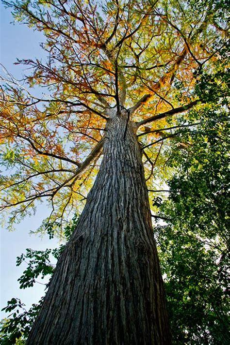 mckinney falls state park nature texas parks wildlife department
