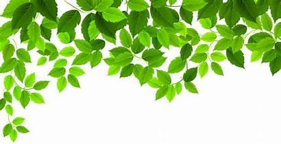 Leaves Spring Clipart Clip Decoration Leaf Transparent