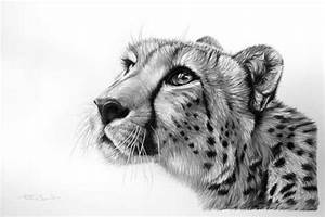 Cheetah Drawing Made By Richardsymonds In The Style Of