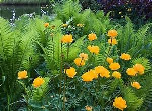 Plantes Vivaces Pour Massif : plantation d 39 un massif de fleurs vivaces ~ Premium-room.com Idées de Décoration