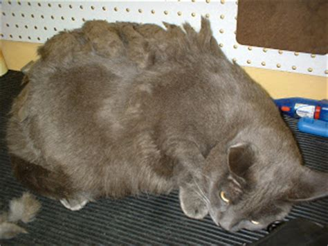 how to get mats out of cat hair pet grooming the the bad the cats