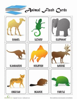animal flashcards preschool sight words