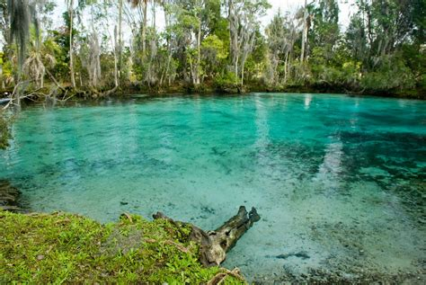 File:Three sisters springs near crystal river national ...