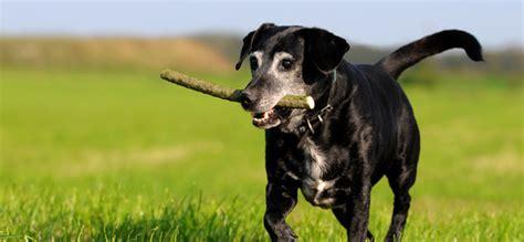 Putztipps Fuer Den Haushalt Mit Hund by Hunde Als Haustiere Ratgeber F 252 R Den Geliebten Vierbeiner
