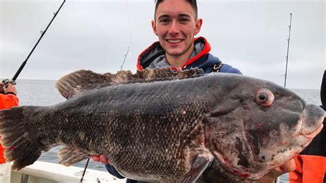 blackfish biggest caught ever