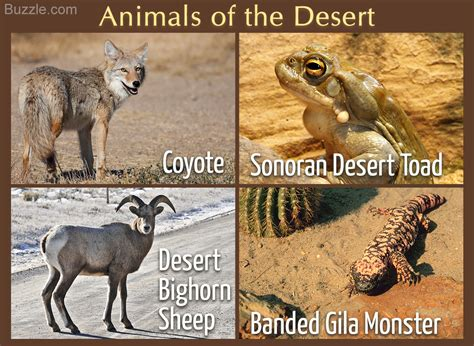 Desert Biome Animals and Plants