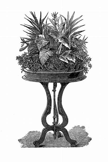 Potted Plant Plants Indoor Gardening Illustrations Digital