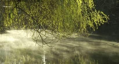 Giphy Mist Fog Tweet Landscape