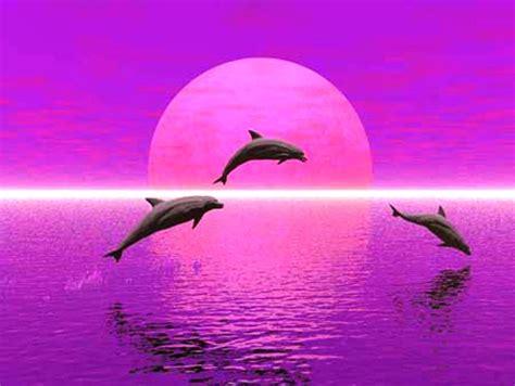 le dauphin ce rabouin des mers le blog d un odieux connard