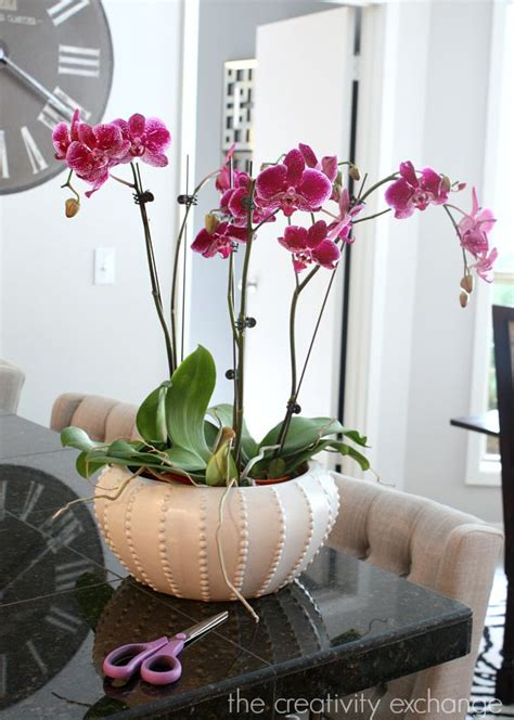 decorating  orchids   great trick  growing