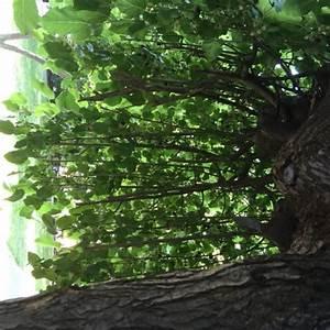 Bäume Für Kleine Gärten : b ume f r kleine g rten gartenakademie ~ Sanjose-hotels-ca.com Haus und Dekorationen