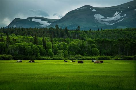 nature, Landscape, Mountains, Horse, Trees, Forest, Clouds ...