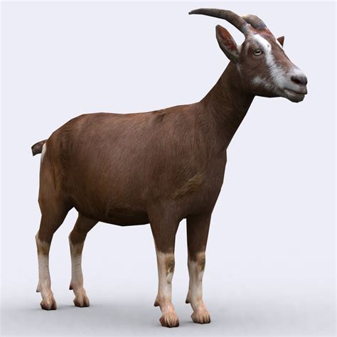 goat animals domestic 3d animal 3drt animated games goats models medieval max facts pack cgtrader hq 3ds cart