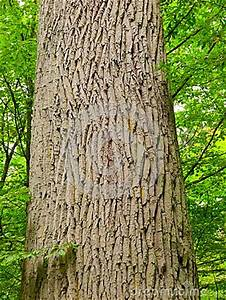 Achat Tronc Arbre Decoratif : tronc d 39 arbre avec l 39 corce rugueuse photo stock image ~ Zukunftsfamilie.com Idées de Décoration