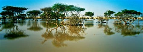 Al Thakira Mangroves | Visit Qatar