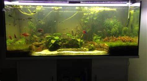 aquarium 600 litres pas cher bac 600 litres au biotope amazonien