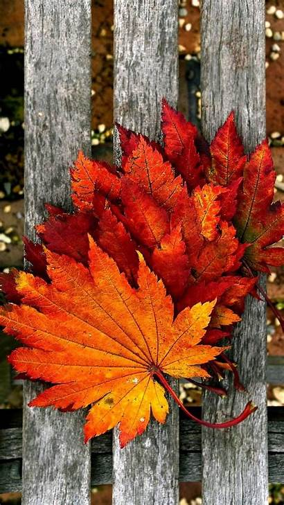 Fall Leaves Autumn Zedge Herbst Iphone Wallpapers