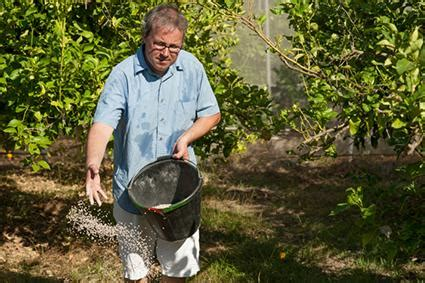 citrus tree care lovetoknow