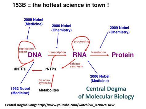 central dogma  molecular biology powerpoint