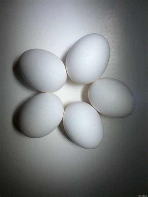 Lieldienu olas Nr.145 — Lieldienas